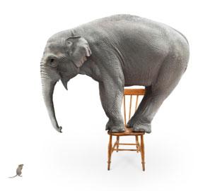 elephant-v-mouse