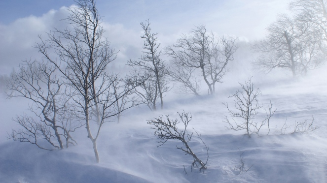 snow-tree-snowstorm-jostedalsbreen-national-park-norway.jpg