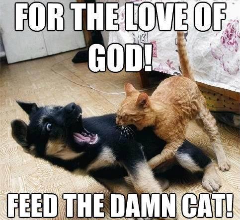 funny-cat-bites-dog-memes