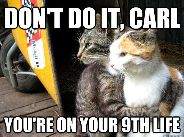 funny-cats-hugging-memes
