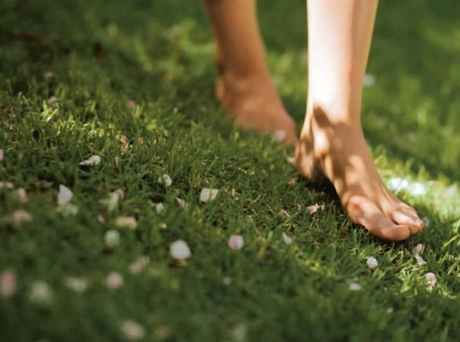 grass-740x550