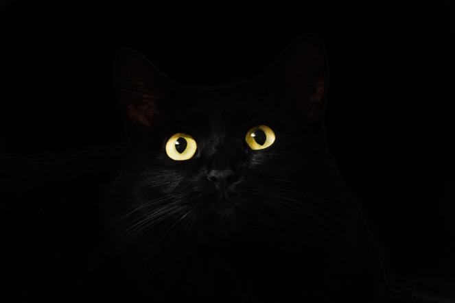 black-2944820_960_720