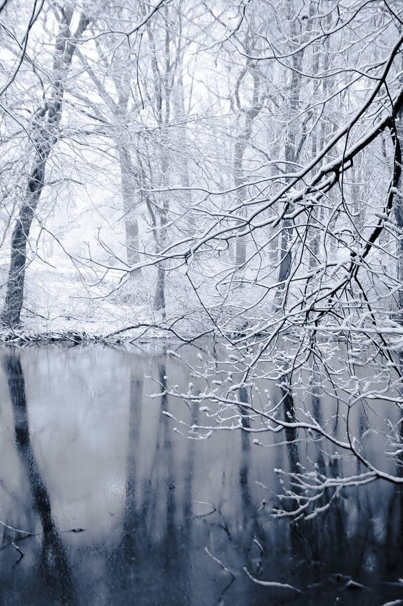 0edee694cb1a6d2114bf6a2d3dba613c--winter-trees-winter-scenery