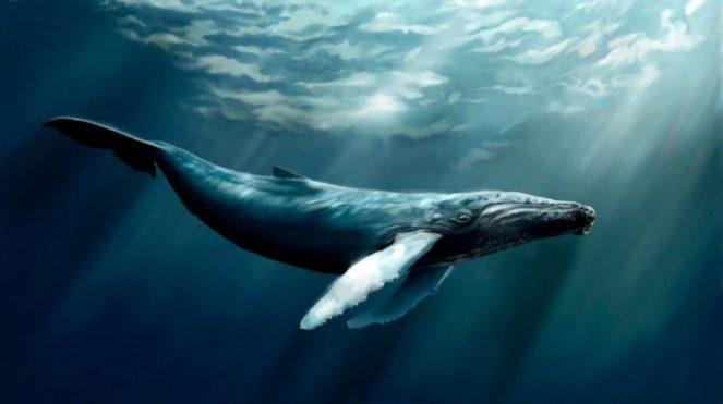 Whale-4-5f011782a181ab05fa1a0cbb6a1d2f14