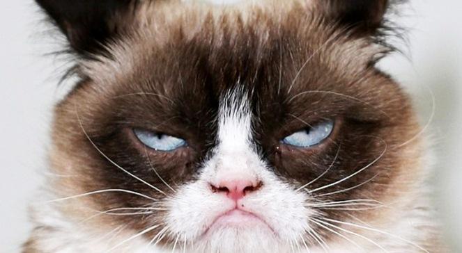 grumpy_cat_ppcore