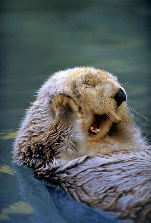4a58cd2290f51591979d733f0ca143b9--cutest-animals-funny-adorable-animals