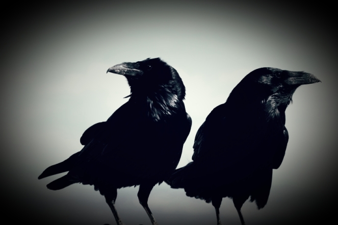 Two Common Ravens at Bryce Canyon National Park